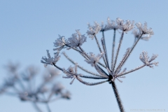 Frost - Eiskristalle